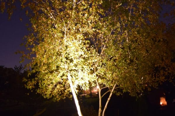 landscape Lighting in Kenosha, tree lighting